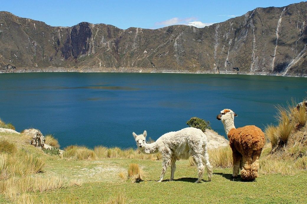 Lamy ekvador jazero