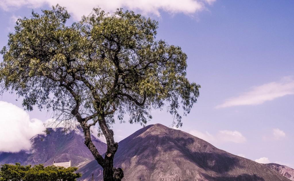 Mitad del Mundo tree hills